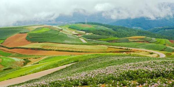 品世食品代加工土豆生产量在9-10月迅速增加